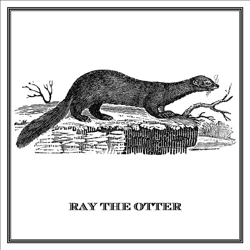 Zoomorphic' Greeting Card Ray The Otter