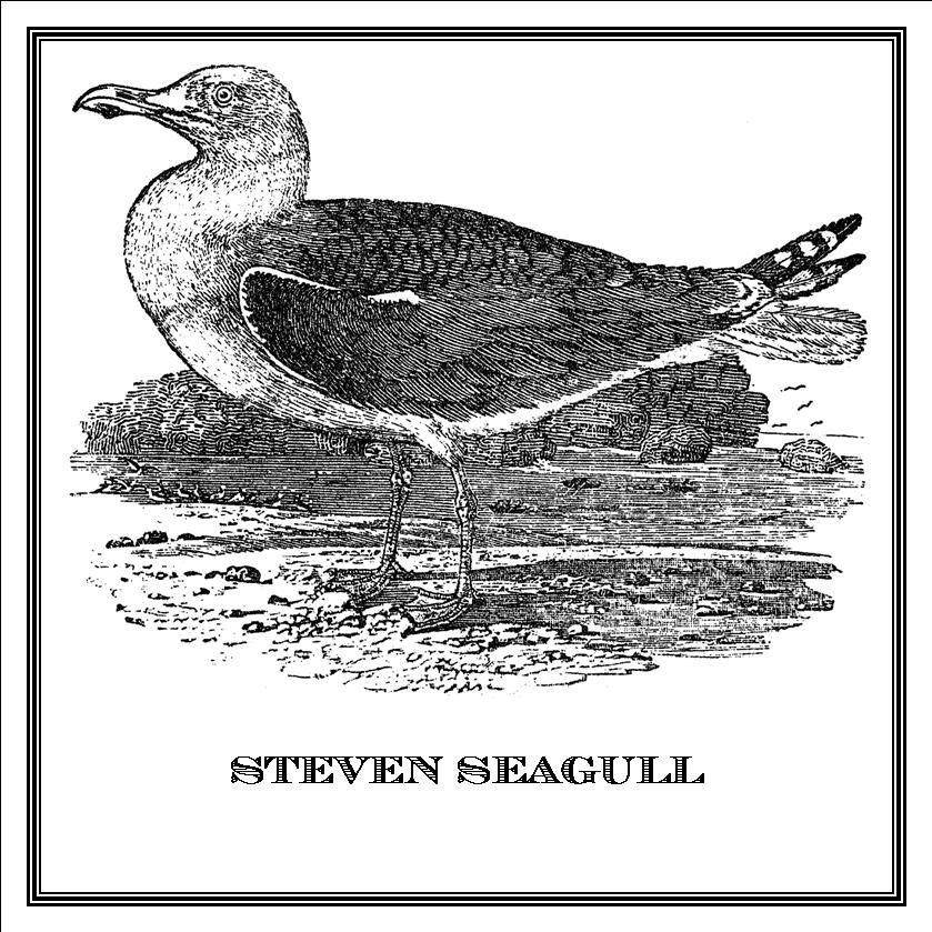 Zoomorphic' Greeting Card Steven Seagull